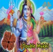 Two Mukhi  Double Phased Rudraksha